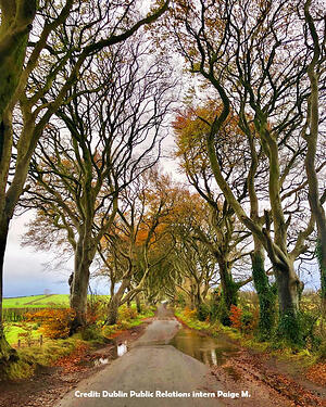 Dark Hedges in Ireland