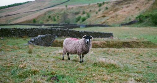Farming Internship in Ireland