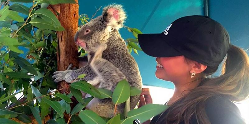 Katie Hunsberger, Sydney, intern, koala