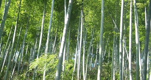 Million Trees Project