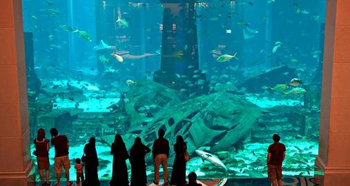 World Leading Bespoke Aquarium Design Firm